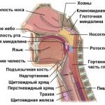 Определение и описание острого ринита