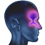 Хронический катаральный насморк