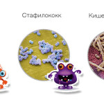 стрептококки, стафилококки