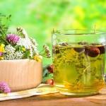 лекарственные травы при бронхите