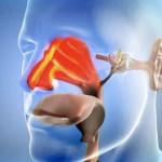 Причины соплей – заболевания ЛОР органов